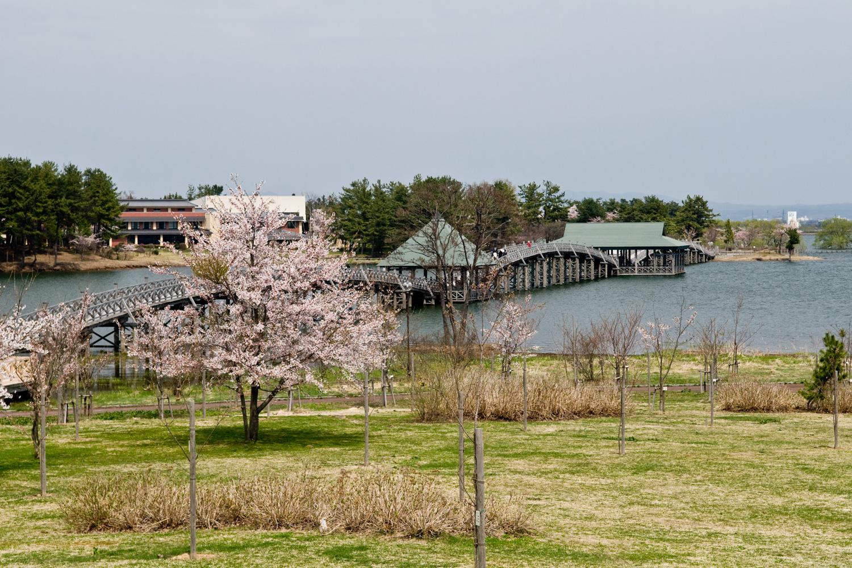 富士見湖パークから丹頂鶴記念公園へかかる鶴の舞橋