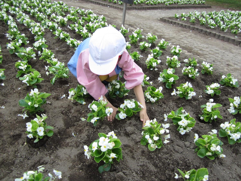 富士見湖パークで花の植栽が行われました