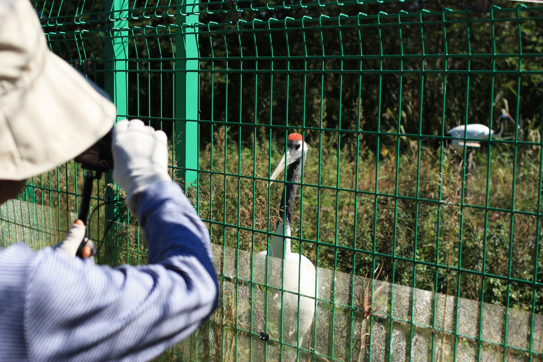 怖がらずに近づいて来てくれる鶴も。丹頂鶴自然公園へ行った際は写真を撮ってみよう。