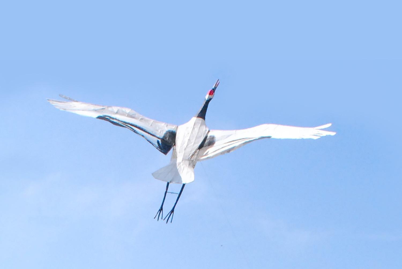 実際に空を飛んでいる丹頂鶴を見ることはなかなかできないが、鶴凧揚げで見ることは可能。