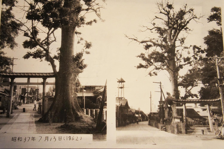 子どものころの遊び場だった、思い出のタモの木。