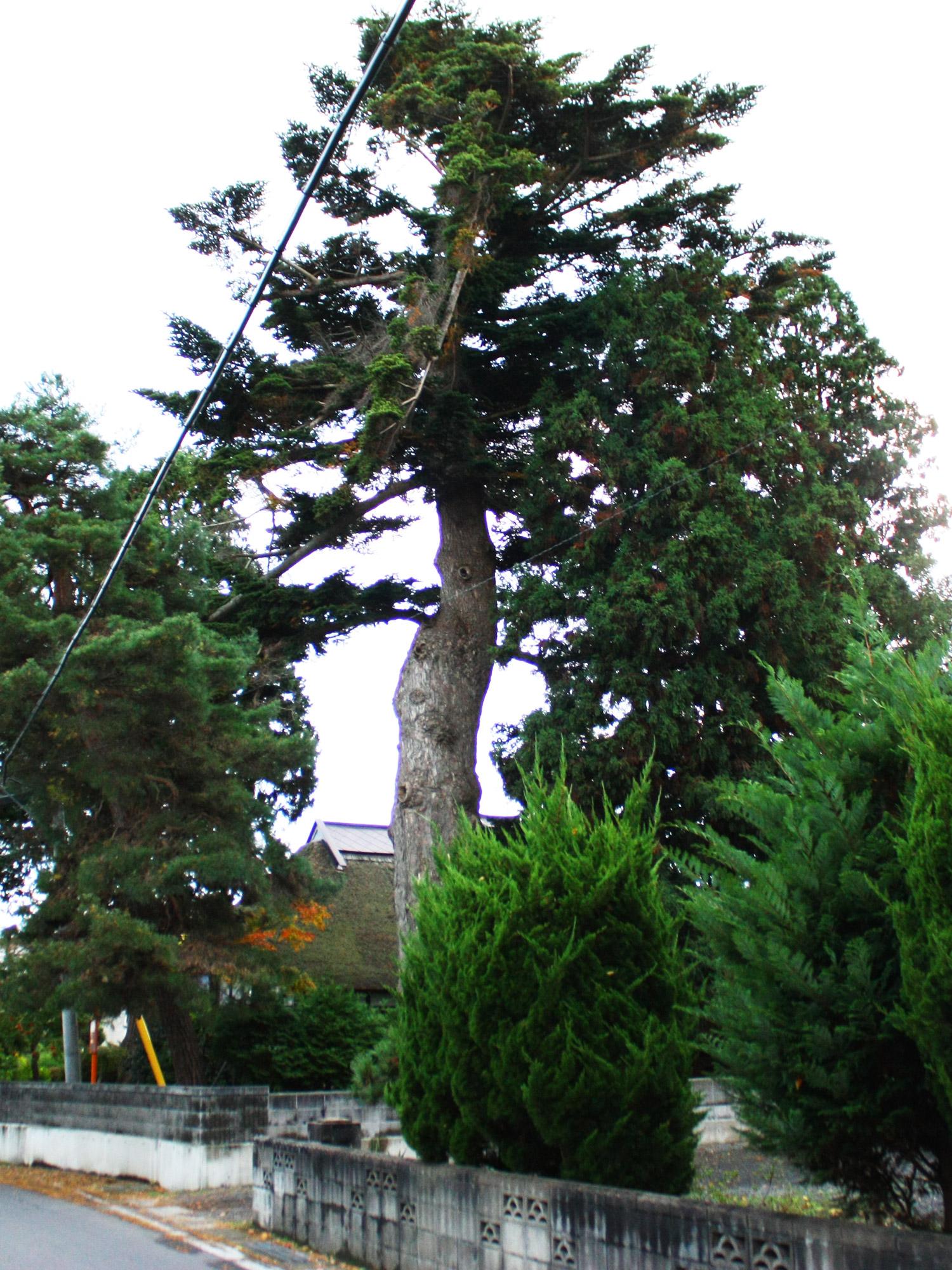 県指定文化財トドロッポは富士見湖パークの近くにある。