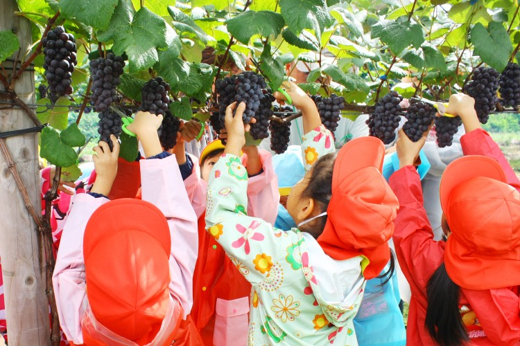 鶴田町のおいしい収穫体験ができる観光農園はこちら