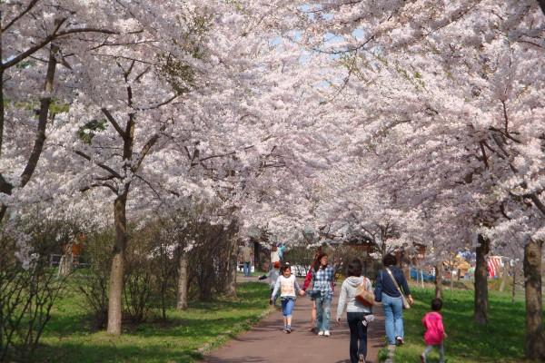津軽富士見湖桜まつり