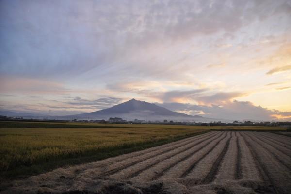 岩木山と稲刈り後の稲田