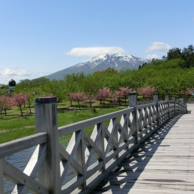 八重桜_鶴の舞橋