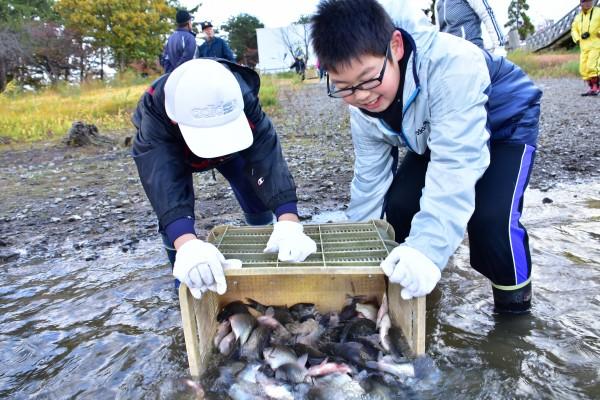 津軽富士見湖へら鮒放流