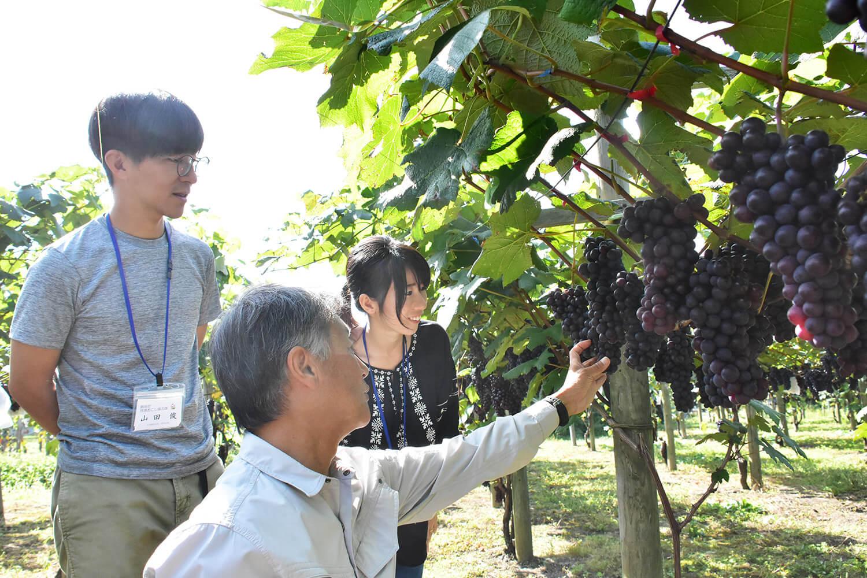 スチューベンの栽培について学ぶ山田夫妻